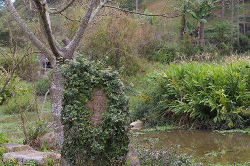 田份仔生態池