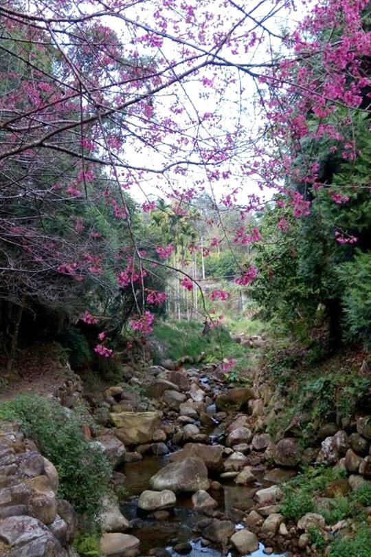 相片來源:日月潭.梢楠園梢楠林露營民宿