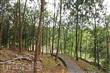 後山森林步道