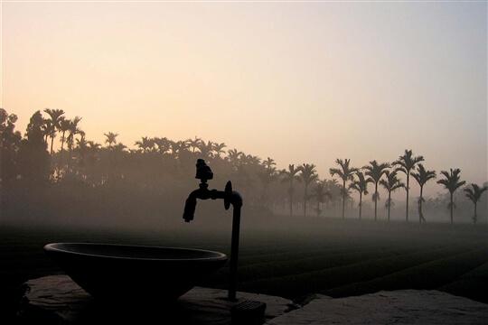 茶園景色 相片來源:木協台灣檜木坊