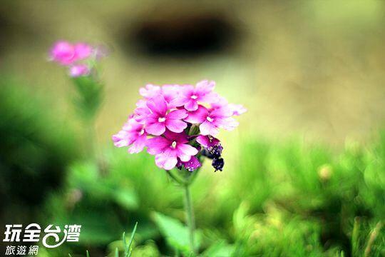 庭園花草寫真 相片來源:瑞里孟宗築民宿~瑞里民宿、住宿(官方網站)