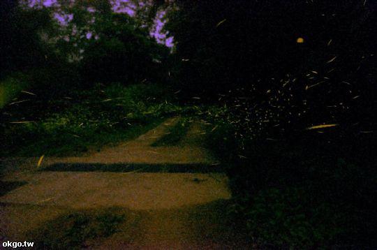 螢火蟲 相片來源:瑞里孟宗築民宿~瑞里民宿、住宿(官方網站)