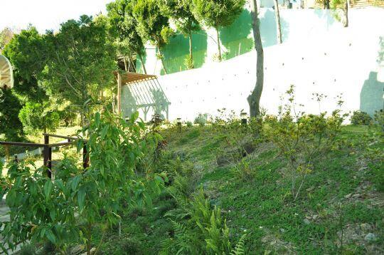 民宿後花園2