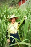 埔里美人腿-自家栽種筊白筍