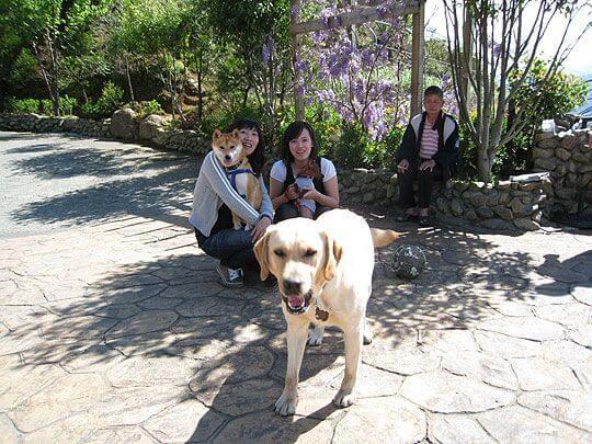 小米~你要去哪~快回來丫~  相片來源:清境家園景觀山莊