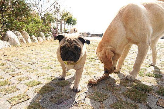小米用力聞聞........這~~~~好吃嗎?? 相片來源:清境家園景觀山莊