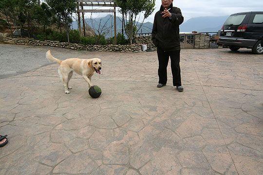 小米:有誰要來跟我PK一下阿 相片來源:清境家園景觀山莊