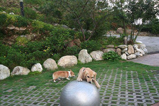 清境家園~小米成長日記 相片來源:清境家園景觀山莊