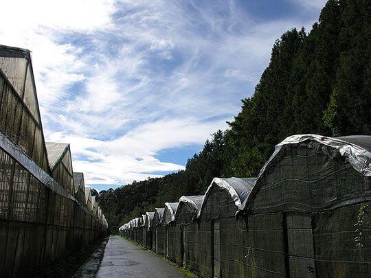 台大梅峰農場 相片來源:清境家園景觀山莊