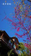 漫步雲端之我愛山櫻花