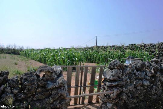 菓葉 相片來源:蔚藍海澎湖民宿