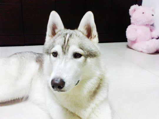 最帥氣的照片 相片來源:墾丁寵物民宿.哈CHEESE