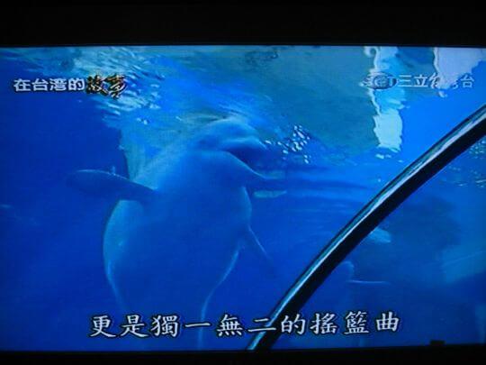 除了照顧狗兒子,他也是白鯨界的爸爸喔! 相片來源:墾丁寵物民宿.哈CHEESE