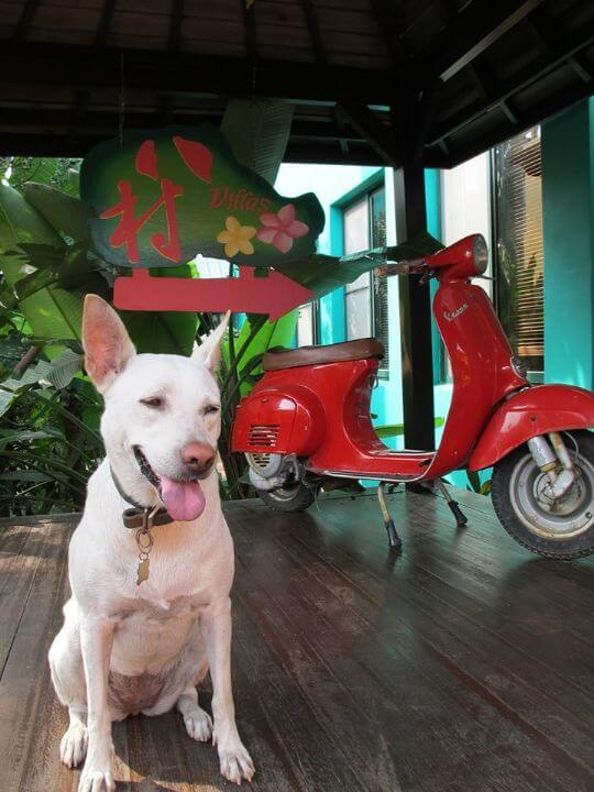 小兒子大學時~領養的狗兒.叫梵思...很親人也很不甘寂寞... 相片來源:小琉球~八村旅店villa館