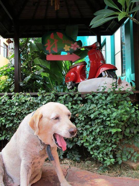 離不開家的多莉 相片來源:小琉球~八村旅店villa館