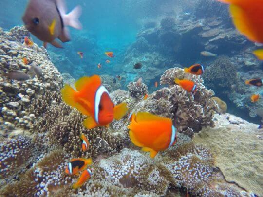 和你打招呼! 相片來源:蘭嶼好望角渡假村