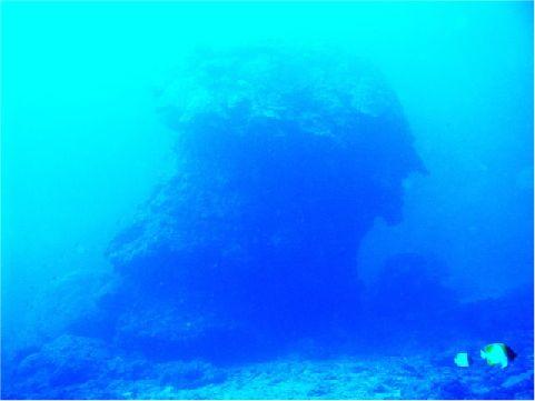 錦紋棘蝶魚 相片來源:綠島長泰海景民宿