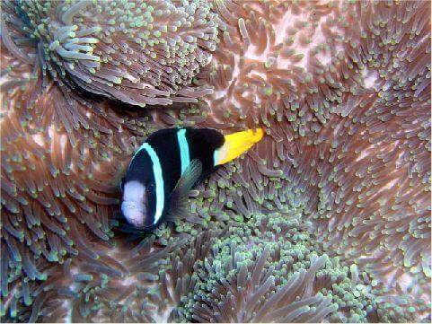 發現綠島-海底生物 相片來源:綠島長泰海景民宿
