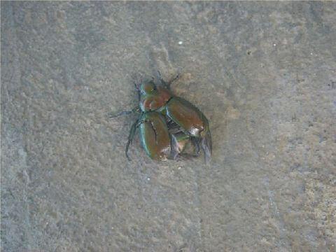 發現綠島-保育 相片來源:綠島長泰海景民宿