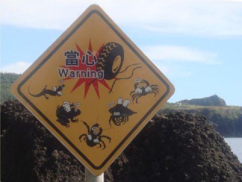 近年來,綠島遊客量每年高達四十萬人次,觀光客最多的三到八月,卻也是綠島野生動物「送命」的最高峰。 相片來源:綠島長泰海景民宿