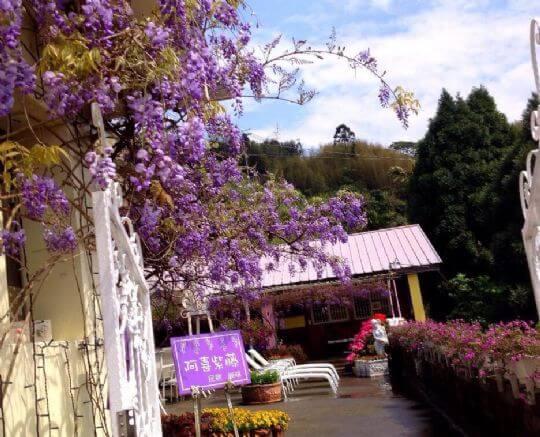 阿喜紫藤民宿外觀 相片來源:瑞里阿喜紫藤民宿