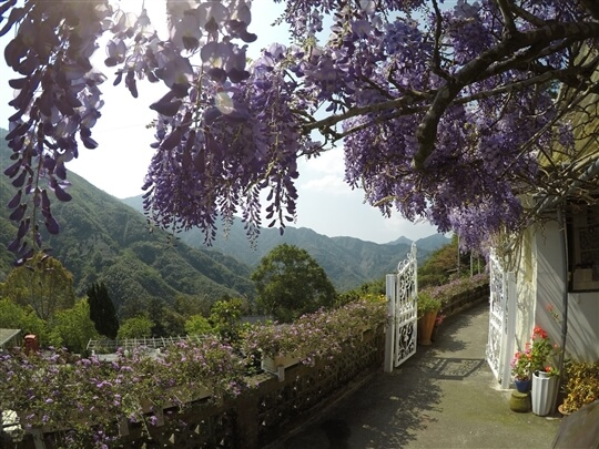 相片來源:瑞里阿喜紫藤民宿