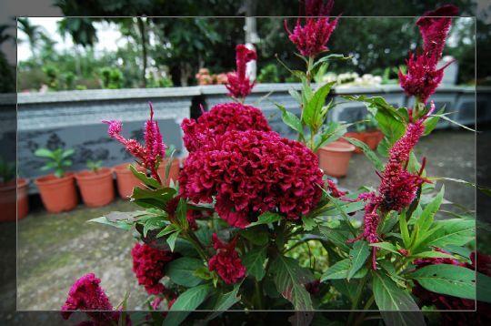 茶壺小花園 相片來源:瑞里茶壺民宿