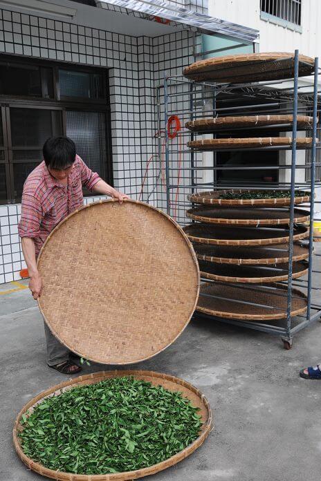 紅茶發酵完成 相片來源:瑞里茶壺民宿