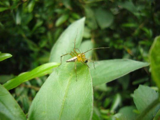 你認的出這隻昆蟲大爺是誰嗎? 相片來源:瑞里幼葉的林民宿
