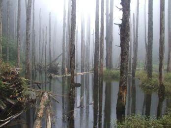 忘憂森林 相片來源:竹山天梯山林瓦舍民宿
