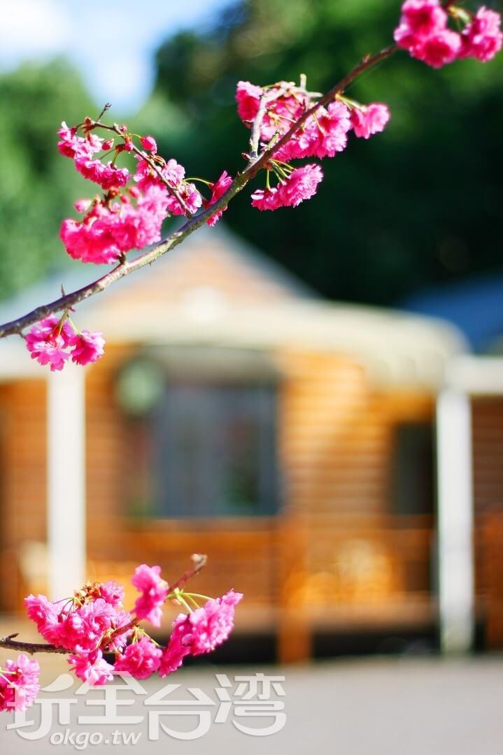 相片來源:溪頭和雅渡假園區木屋民宿