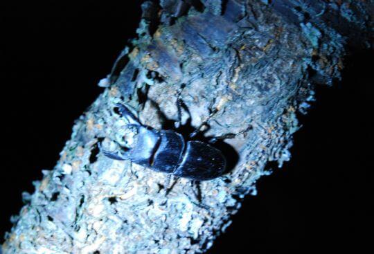 園區的昆蟲2012.6.26 相片來源:溪頭逍遙居民宿