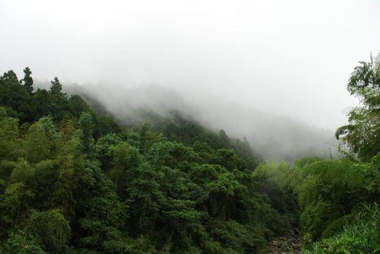 內湖國小&溪頭2012.8.25 相片來源:溪頭逍遙居民宿