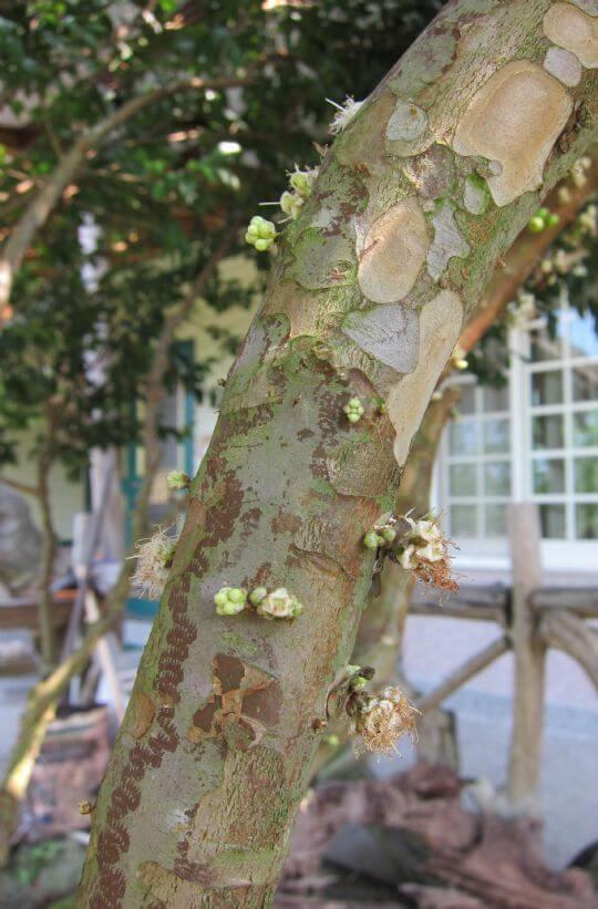 春天到來2012.4.2 相片來源:溪頭逍遙居民宿