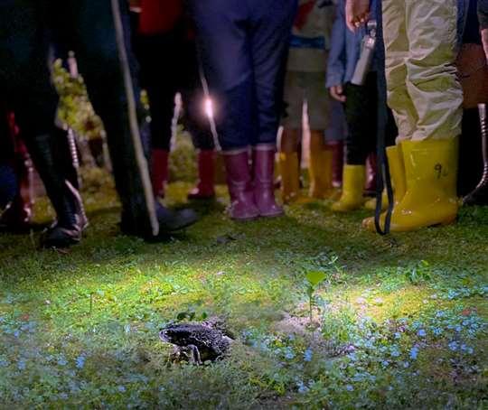 相片來源:青蛙ㄚ婆ㄟ家民宿