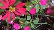 馬赫坡森林花卉