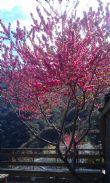 2月賞花季