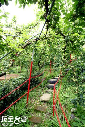 水蜜桃農場