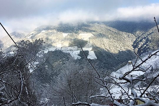 2016年雪景 相片來源:拉拉山佳儂景觀休憩農場