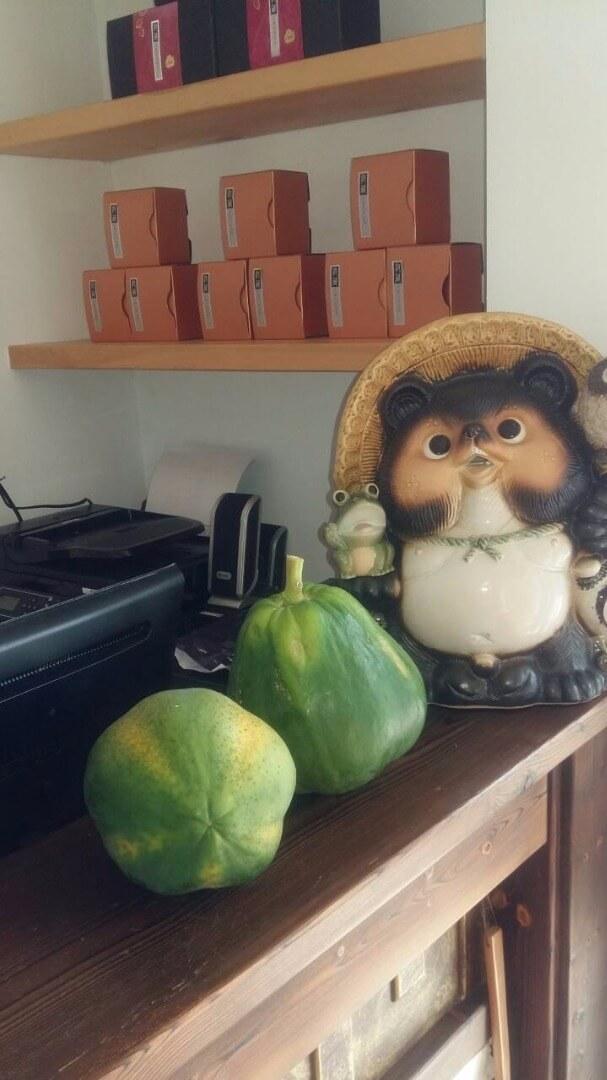 今天清晨到後面山坡上摘了兩颗大木瓜,荳田町的野生木瓜超甜的,大概是日照充足又山坡地排水良好吧,採果樂,喜悅共享。 相片來源:溪頭荳田町民宿-官方網站