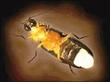 螢火蟲休閒屋