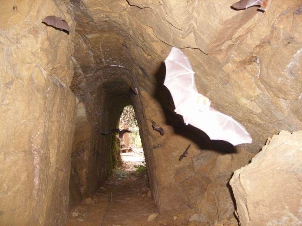 本民宿100公尺處有座神秘古蹟 憶起去探訪 相片來源:新社‧中和渡假山莊