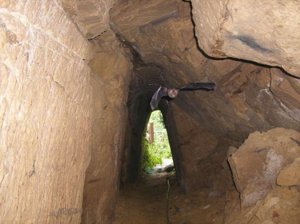 本民宿100公尺處有座神秘古蹟 一起去探訪 相片來源:新社‧中和渡假山莊
