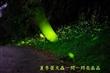 夏季夜裡的螢火蟲
