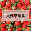 苗栗大湖草莓季