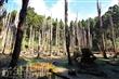 忘憂森林-枯水期