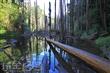 忘憂森林-有水期