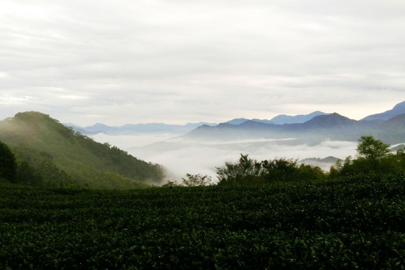 相片來源:竹山霧境民宿