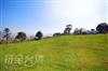 草皮體驗區