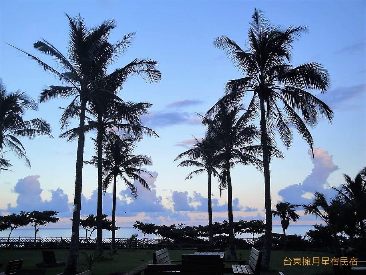 椰林剪影 相片來源:台東民宿•擁月星宿(原福樟紅檜木屋)